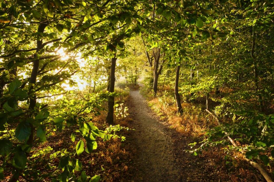 Wald auf Usedom