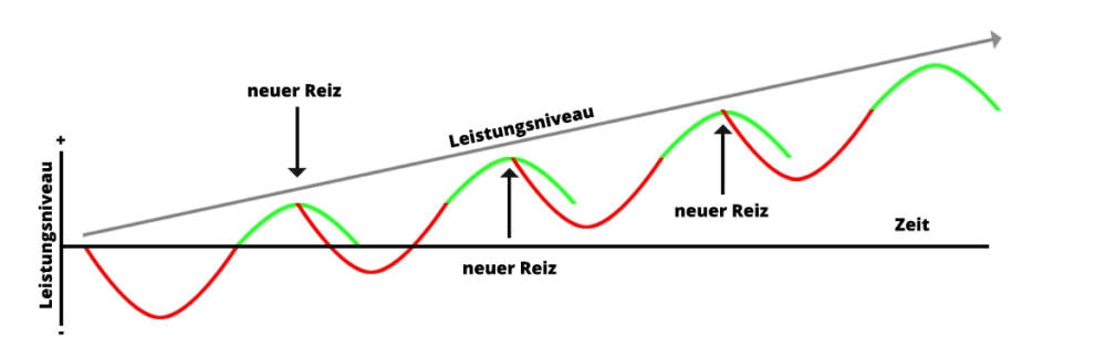 Grafik zur Superkompensation