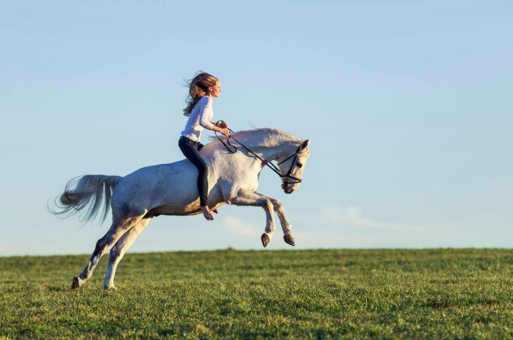 Eine Reiterin auf dem freien Feld