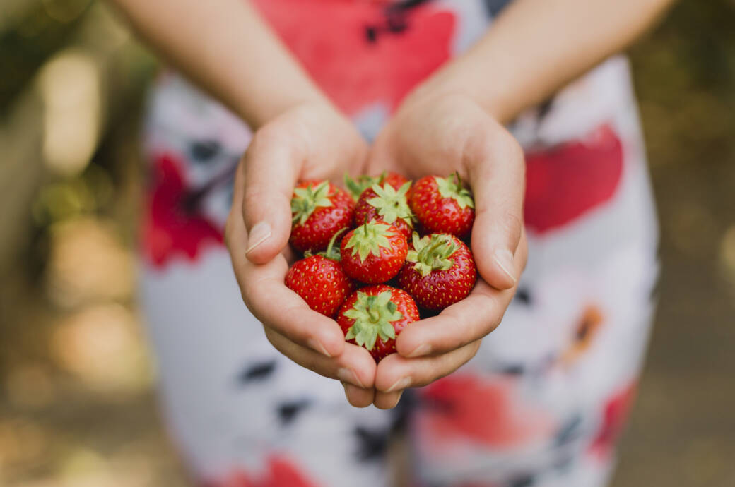 Frau hält Erdbeeren in den Händen