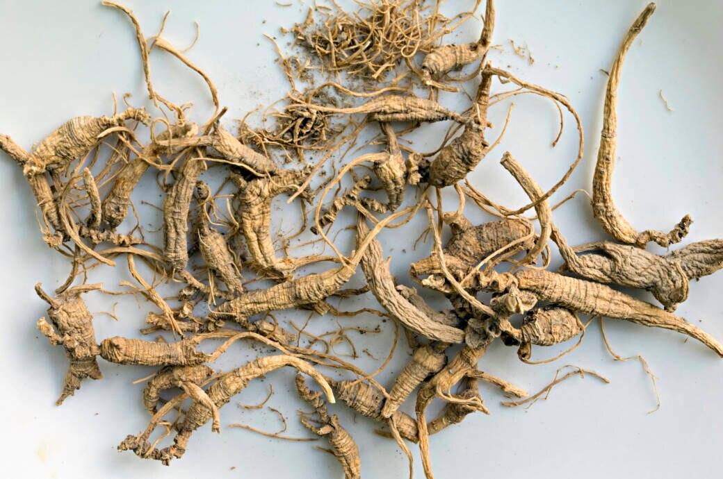Ginseng-Wurzel