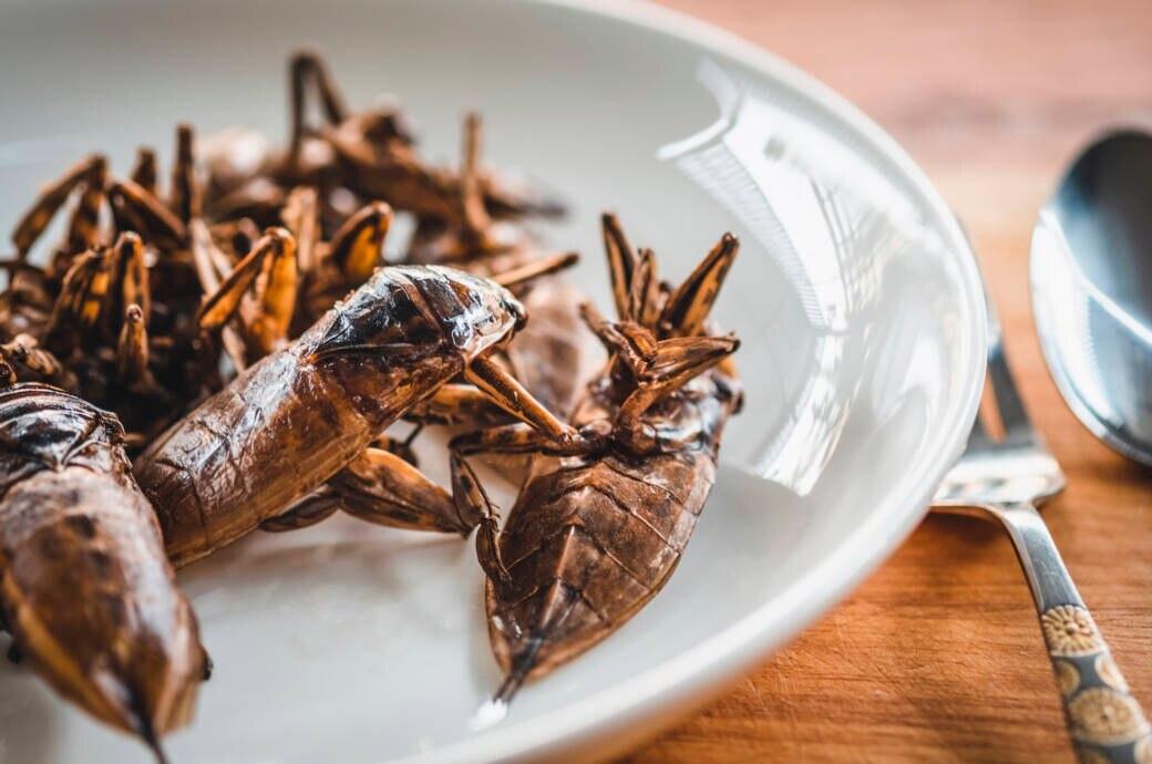 Insekten essen soll vor Krebs schützen können