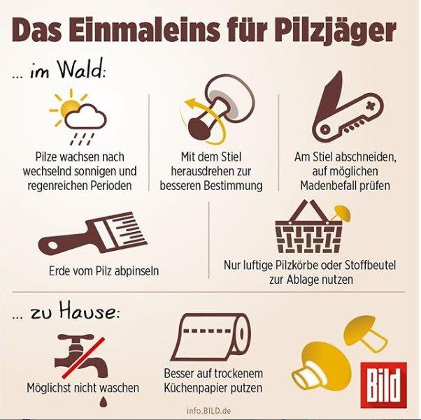 Infografik Pilze