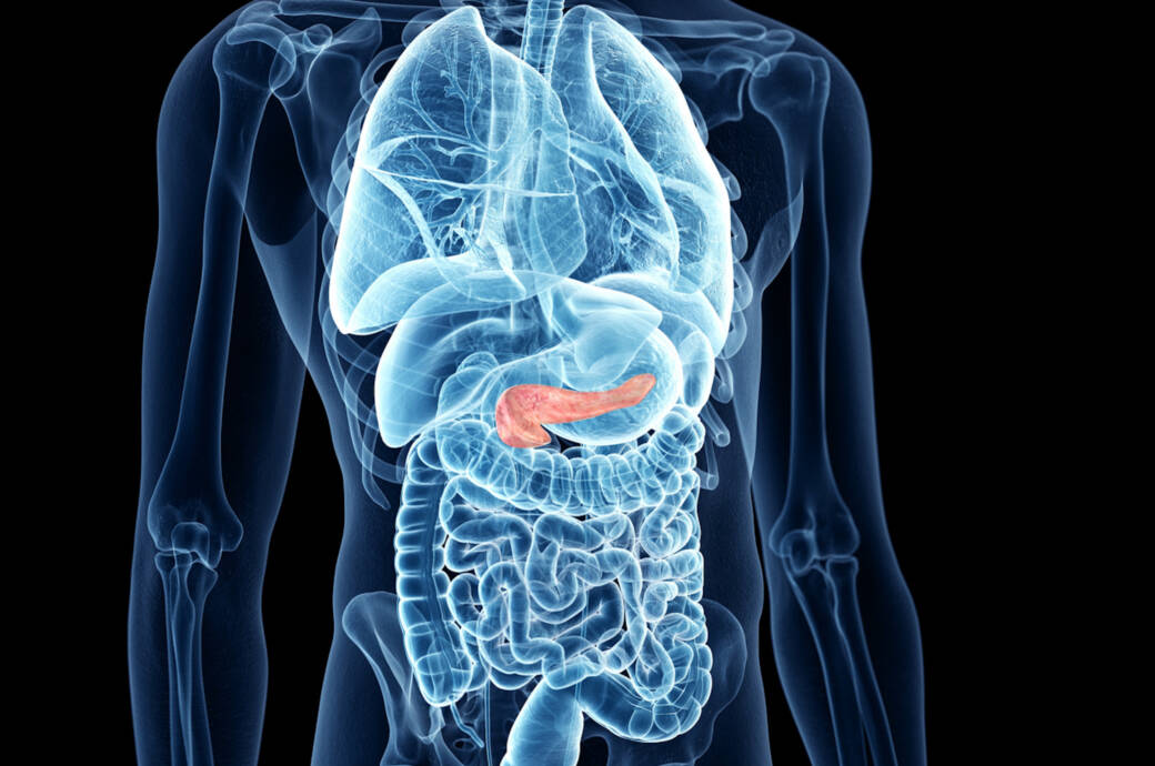 Bauchspeicheldrüse Illustration