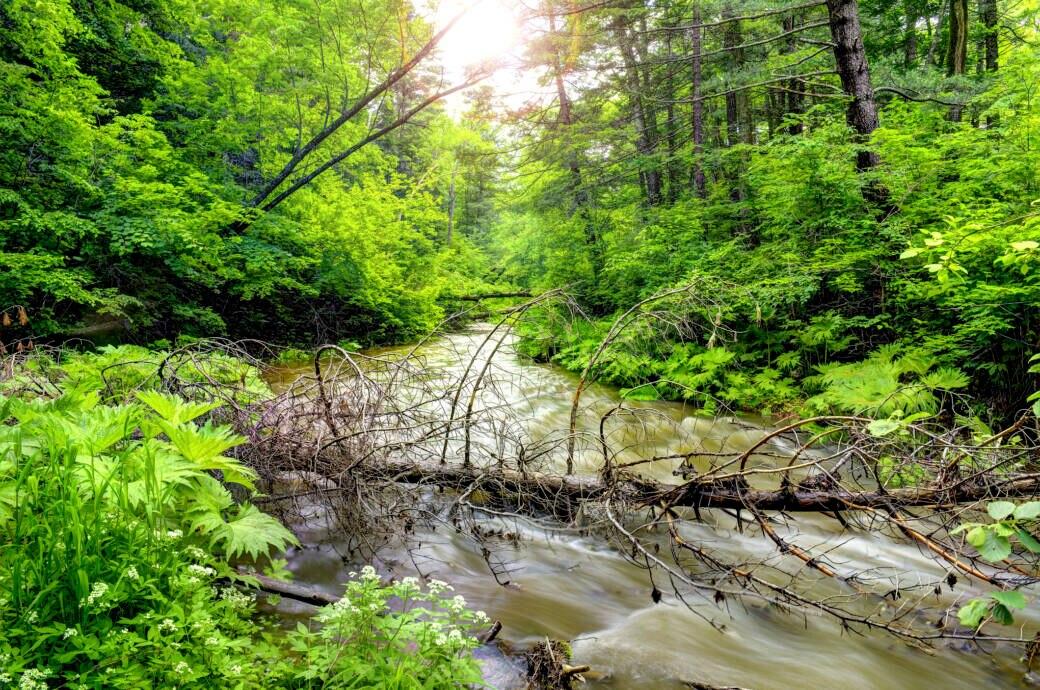 Durch Waldgeräusche fühlen wir uns um 30 Prozent entspannter