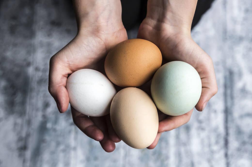 Eier mit unterschiedlicher Schalenfärbung