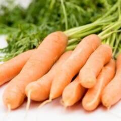 Carotinoide sorgen bei Möhren für die frische Farbe - und zählen zu den sekundären Pflanzenstoffen.