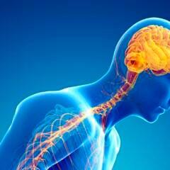 Frühe Parkinson-Symptome: Nervenzellen bei Parkinson