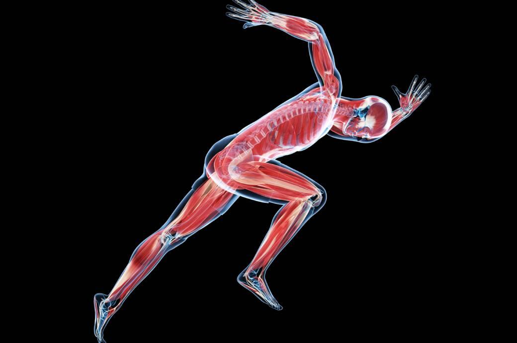Muskelfasertyp: Eine künstlerische Abbildung eines Sprinters