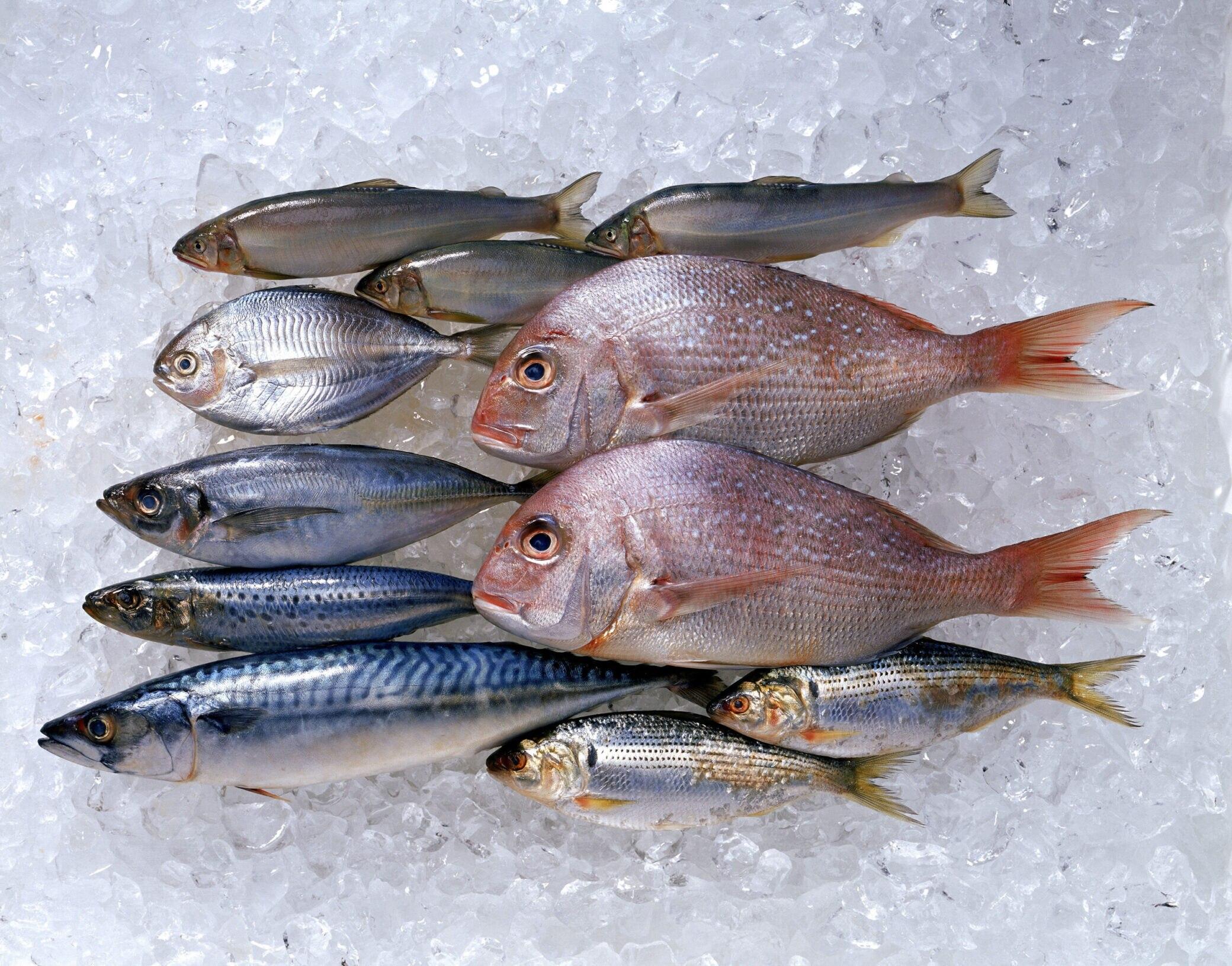 Welchen Fisch kann man bedenkenlos essen? - FITBOOK