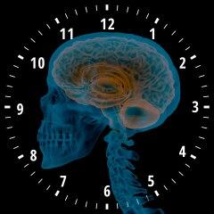 Der zirkadiane Rhythmus: Die innere Uhr in unserem Körper